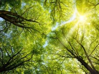 Ein Stadtwaldspaziergang - Geheimnisvoller Garten Marias